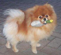 Don T Forget Me Dog Hotel Amp Resort Dog Day Care Amp Dog